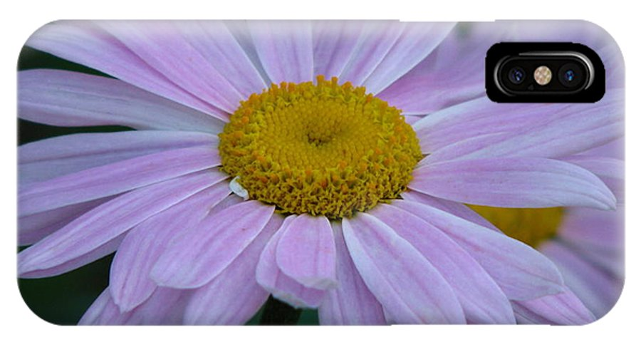Flower IPhone X Case featuring the photograph Pink Daisys by Paul Slebodnick