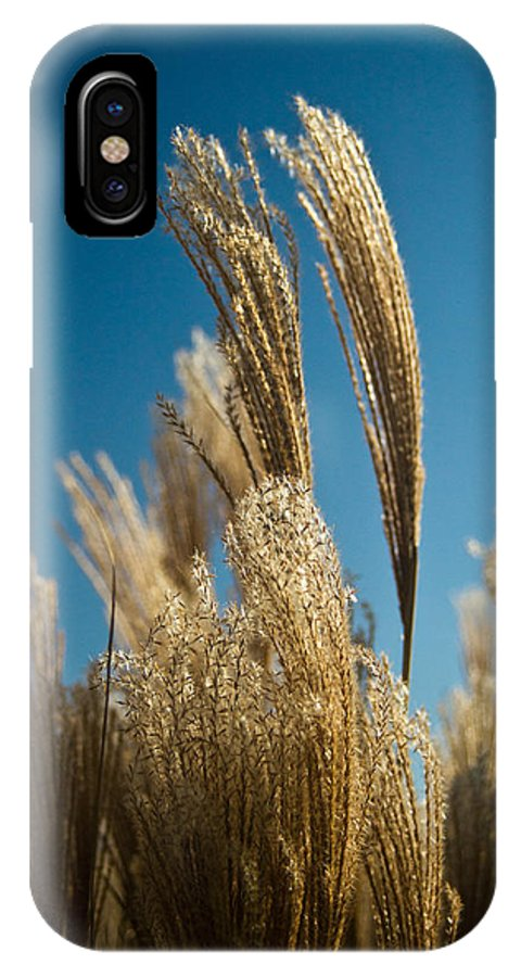 Cortaderia IPhone X Case featuring the photograph Pompas Grass 1 by Douglas Barnett