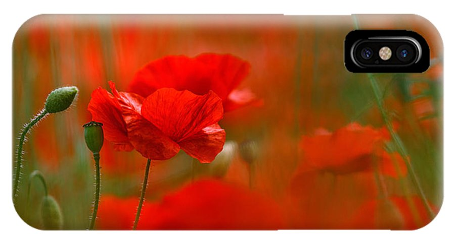 Poppy IPhone X Case featuring the photograph Poppy Flowers 02 by Nailia Schwarz