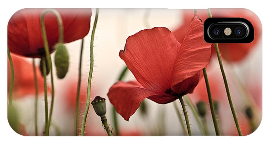 Poppy IPhone X Case featuring the photograph Poppy Flowers 04 by Nailia Schwarz