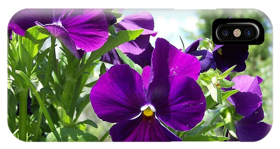 Pansy IPhone X / XS Case featuring the photograph Purple Delight by Susan Saver