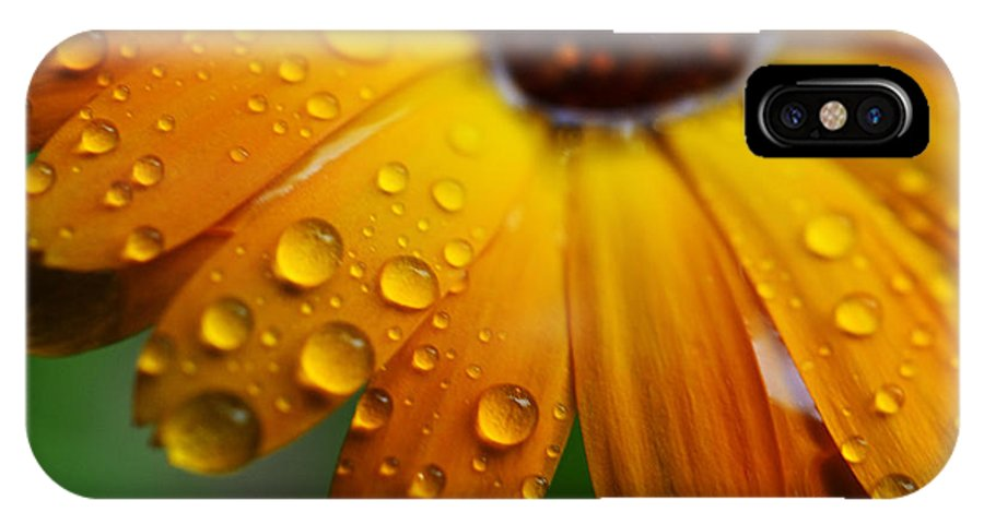 Orange IPhone X Case featuring the photograph Rainy Day Daisy by Thomas R Fletcher