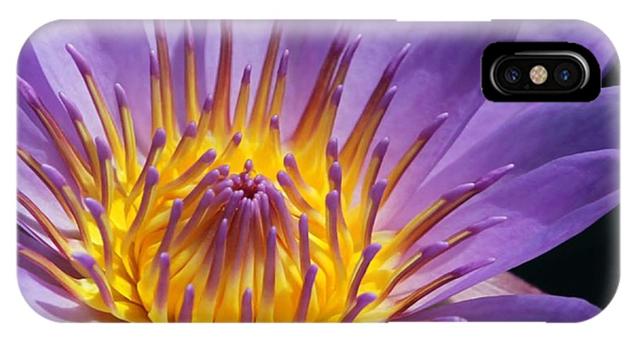 Water Lily IPhone X Case featuring the photograph Reaching For The Sun by Sabrina L Ryan