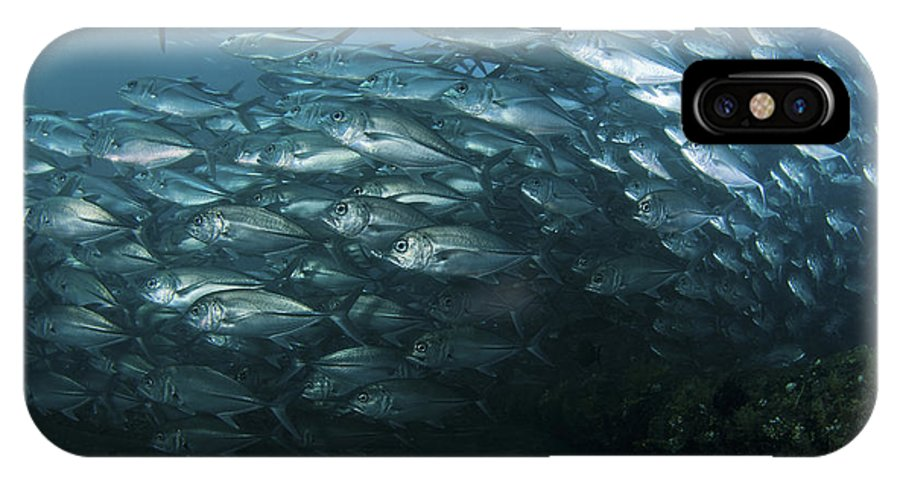 Trevally IPhone X Case featuring the photograph School Of Trevally Swimming By, Bali by Mathieu Meur