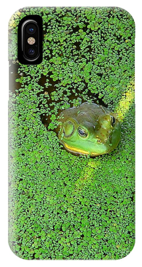 Frog IPhone X Case featuring the photograph Sea Of Green by Arthur Herold Jr