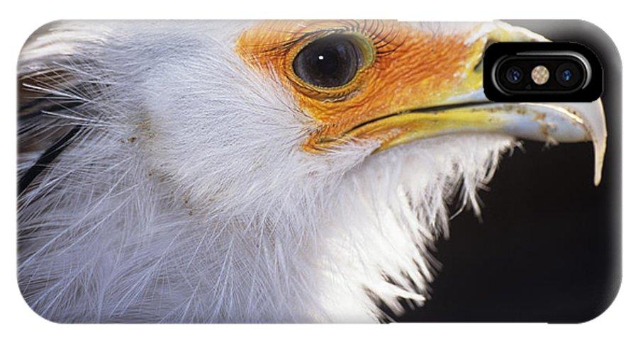 Sagittarius Serpentarius IPhone X / XS Case featuring the photograph Secretary Bird by David Aubrey
