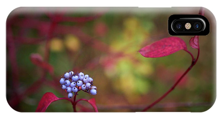 Lehtokukka IPhone X / XS Case featuring the photograph Siberian Dogwood by Jouko Lehto