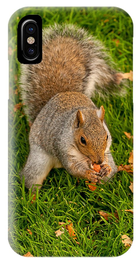 Squirrel IPhone X Case featuring the photograph Snack Time by Paul Mangold