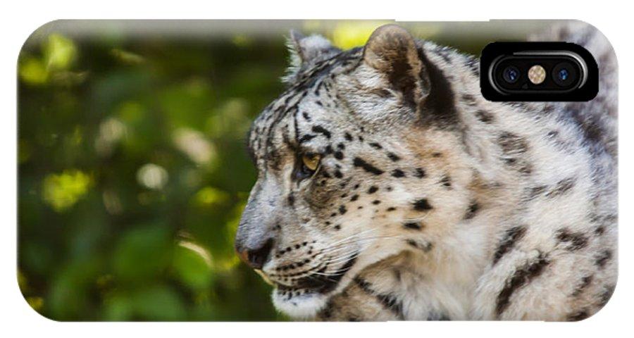 Dawn Oconnor Dawnoconnorphotos@gmail.com IPhone X Case featuring the photograph Snow Leopard by Dawn OConnor