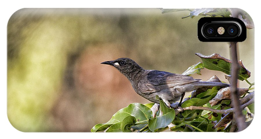 White-gaped Honeyeater IPhone X Case featuring the photograph Sweet As Honey by Douglas Barnard