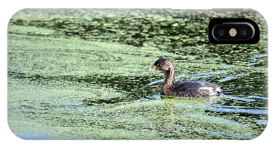 Teresa Blanton IPhone X / XS Case featuring the photograph Swimming Along by Teresa Blanton