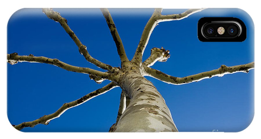 Tree IPhone X Case featuring the photograph Tree With Branches by Mats Silvan