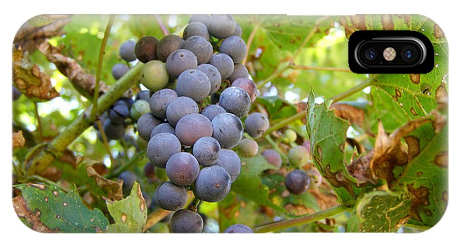 Wild Grapes IPhone X Case featuring the photograph Wild Grapes by Angie Rea