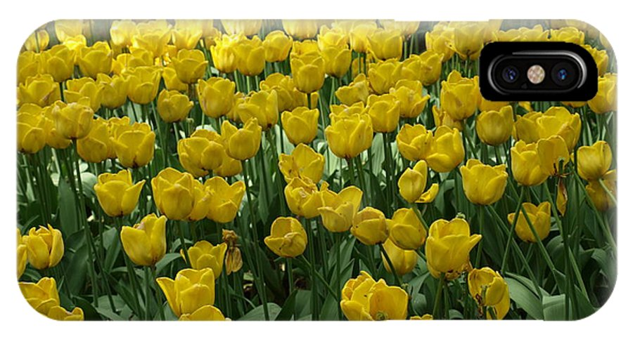 Flowers IPhone X Case featuring the photograph Yellow Tulips 2 by Larry Krussel