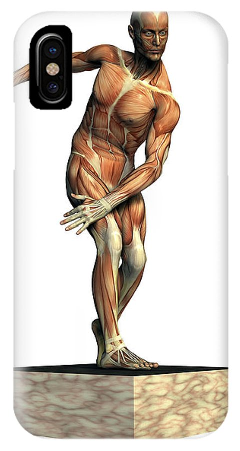 Muscle IPhone X Case featuring the photograph Male Musculature by Friedrich Saurer
