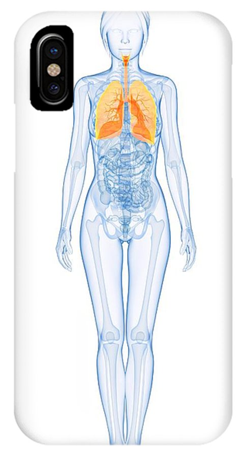 Artwork IPhone X / XS Case featuring the photograph Healthy Lungs, Artwork by Sciepro