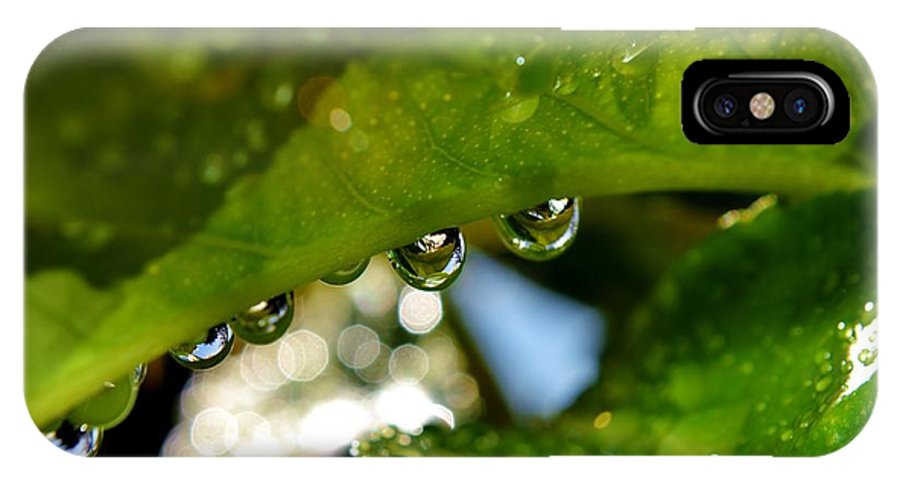 Close Up; Raindrops; Green; Leaf; Reflection; Nature; Plant; Garden; Water; Wet; Droplets; Background; Decorative; Clear; IPhone X Case featuring the photograph Raindrop On Leaf by Werner Lehmann