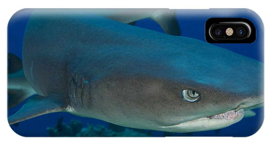 Chondrichthyes IPhone X Case featuring the photograph Whitetip Reef Shark, Kimbe Bay, Papua by Steve Jones
