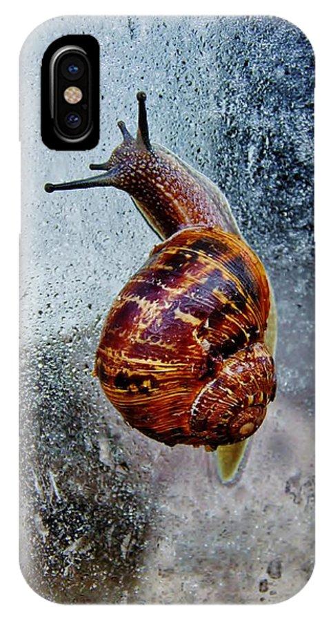 Snail; Invertebrate; Garden; Macro; Nature; Brown; Beige; Spring; Wet; Water; Raindrops; Window; Pane; Background; Decorative; Spiral; Gastropod; IPhone X / XS Case featuring the photograph Garden Snail by Werner Lehmann