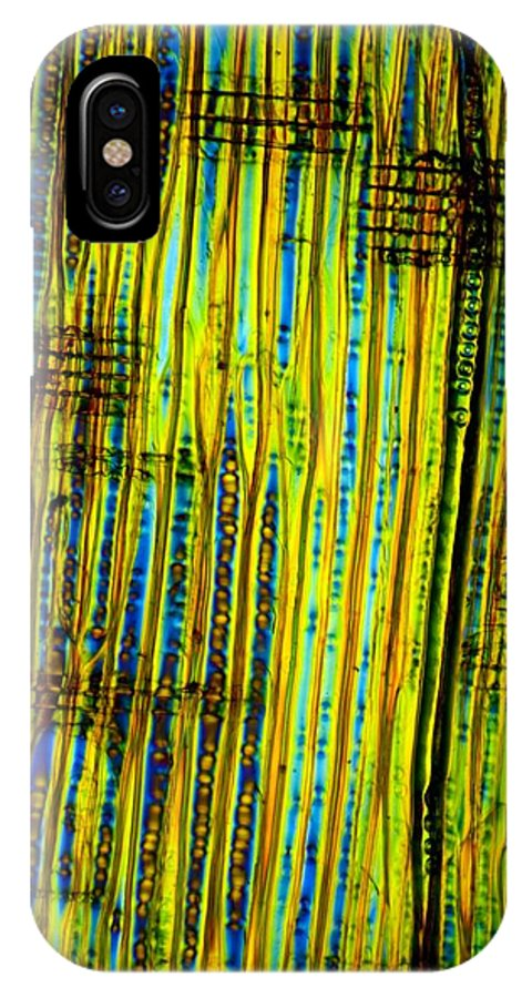 Plant IPhone X / XS Case featuring the photograph Pine Stem, Light Micrograph by Dr Keith Wheeler
