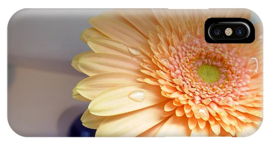 Gerbera Photographs IPhone X Case featuring the photograph 1511c1 by Kimberlie Gerner