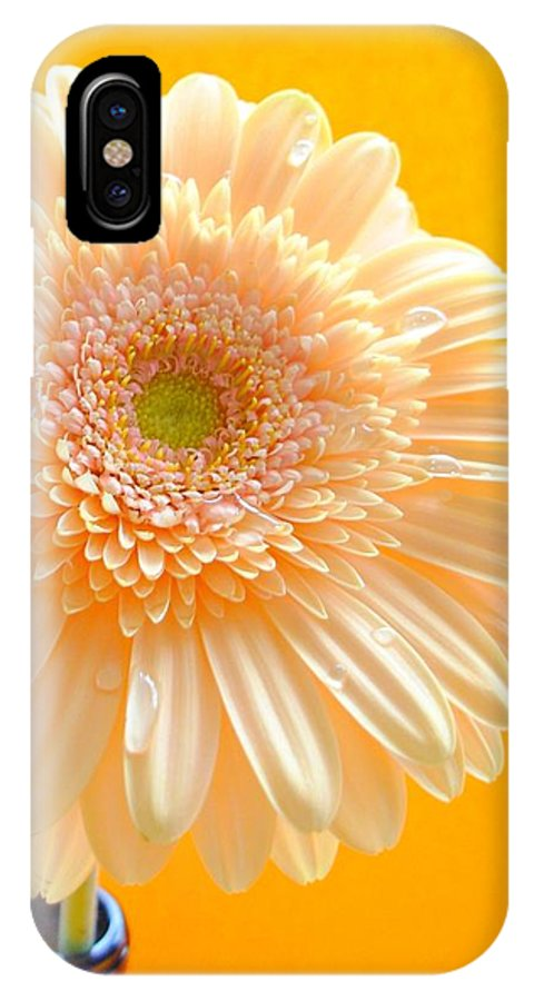Gerbera Photographs IPhone X Case featuring the photograph 1527-002c by Kimberlie Gerner