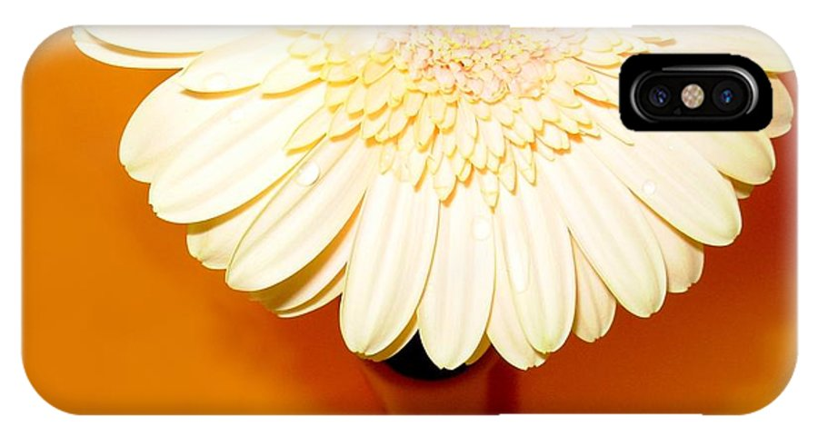 Gerbera Photographs IPhone X Case featuring the photograph 1550c by Kimberlie Gerner