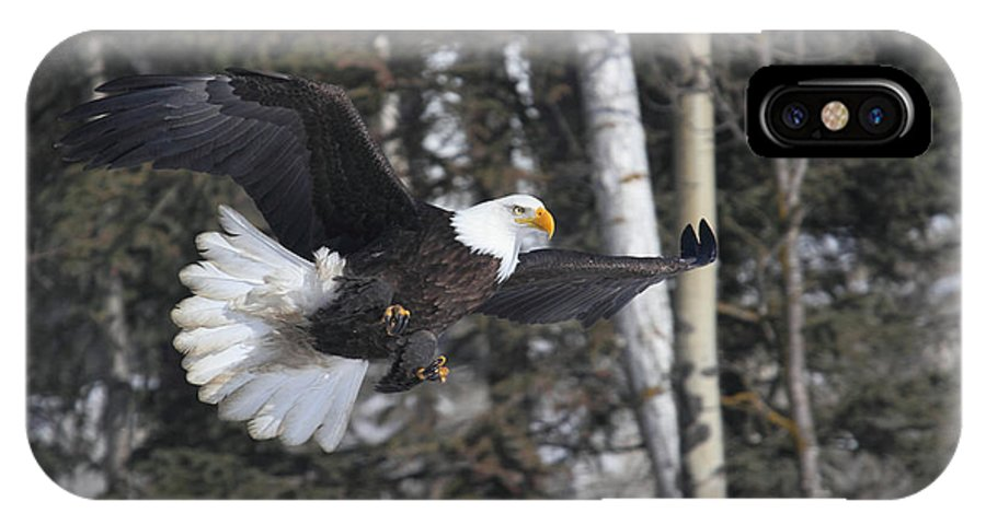Doug Lloyd IPhone X Case featuring the photograph American Bald Eagle by Doug Lloyd