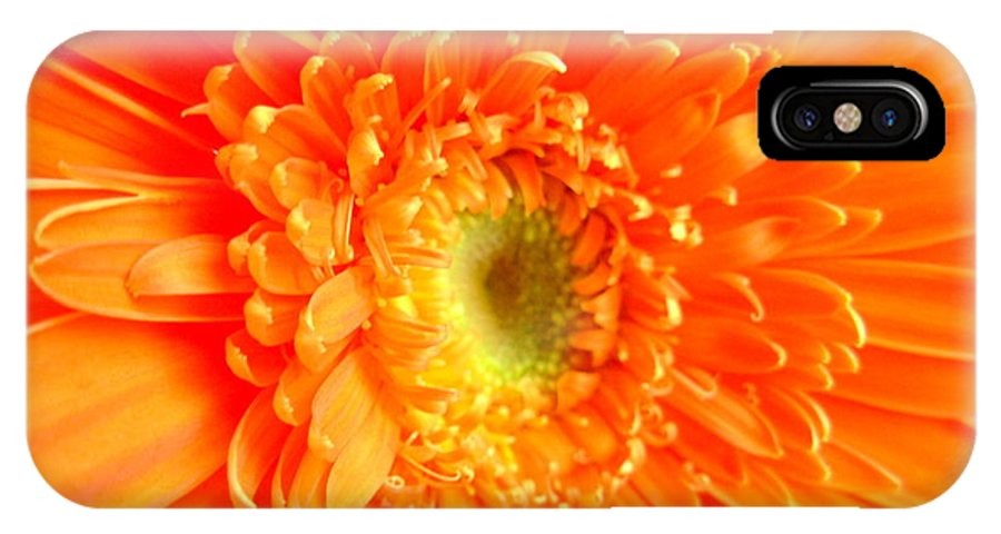 Gerbera Photographs IPhone X Case featuring the photograph 1628-001 by Kimberlie Gerner