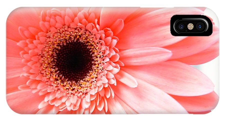 Gerbera Photographs IPhone X Case featuring the photograph 1631c by Kimberlie Gerner