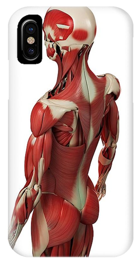 Artwork IPhone X / XS Case featuring the photograph Male Muscles, Artwork by Sciepro