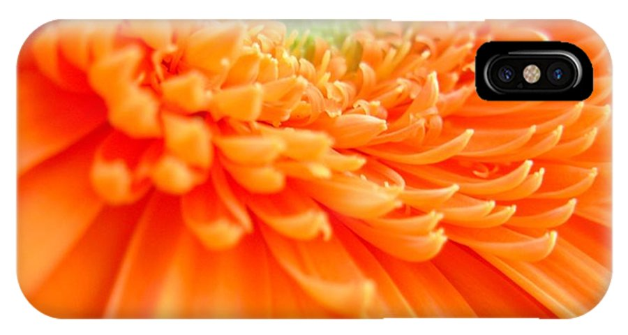 Gerbera Photographs IPhone X Case featuring the photograph 1822c by Kimberlie Gerner
