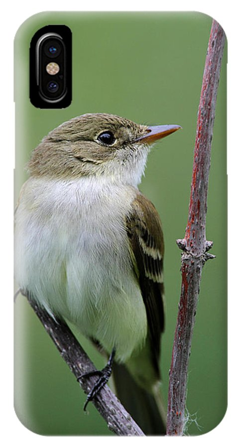 Doug Lloyd IPhone X Case featuring the photograph Alder Flycatcher by Doug Lloyd