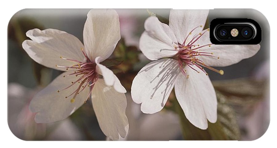 Scenes And Views IPhone X / XS Case featuring the photograph Close View Of Cherry Blossoms by Darlyne A. Murawski