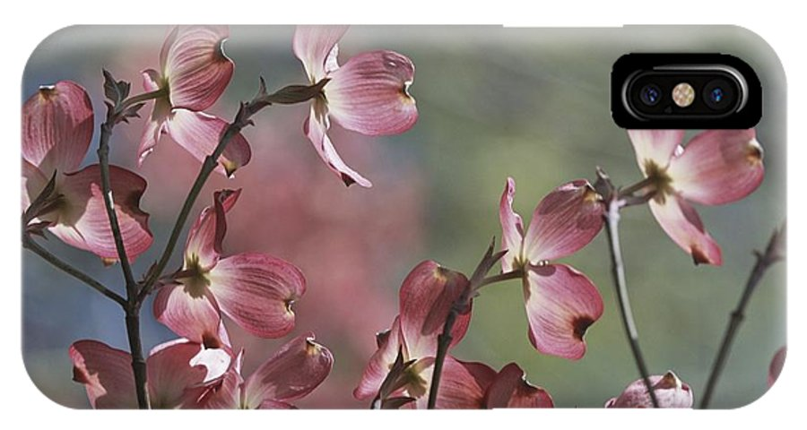Scenes And Views IPhone X / XS Case featuring the photograph Close View Of Pink Dogwood Blossoms by Darlyne A. Murawski