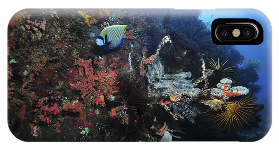 Crinoid IPhone X Case featuring the photograph Colorful Reef Scene With Coral by Mathieu Meur