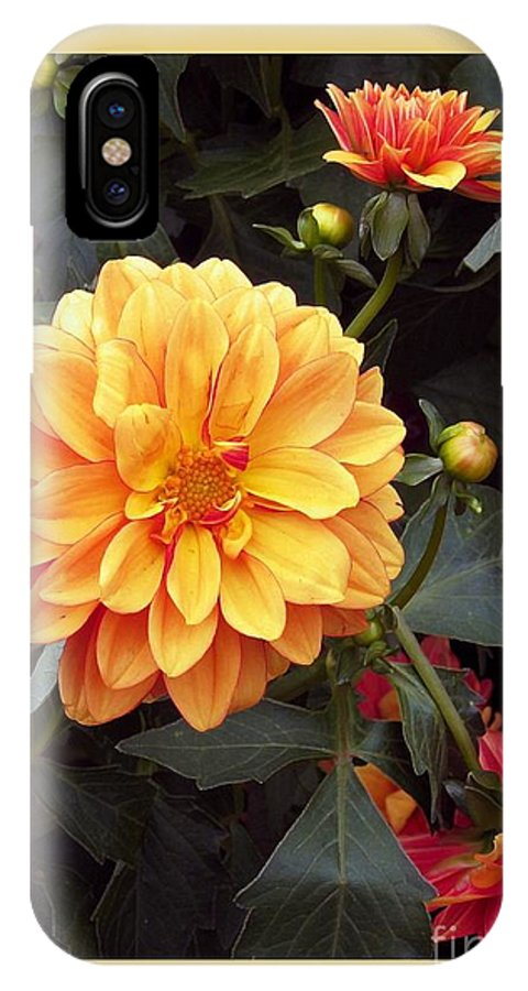 Greeting Cards IPhone X Case featuring the digital art Dahlias by Dale  Ford