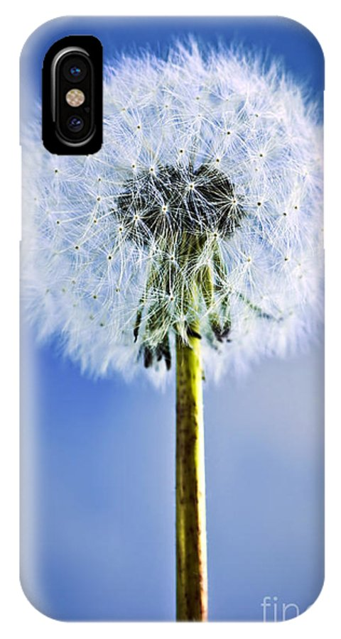 Dandelion IPhone X Case featuring the photograph Dandelion by Elena Elisseeva