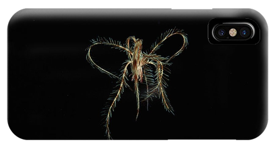 Zoology IPhone X / XS Case featuring the photograph Featherstar by Alexis Rosenfeld
