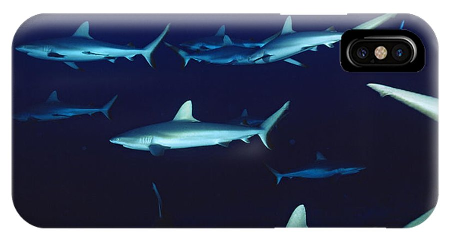 Grey Reef Shark IPhone X / XS Case featuring the photograph Grey Reef Sharks by Alexis Rosenfeld