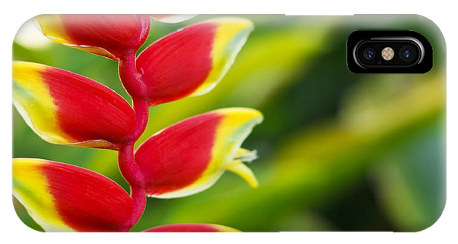 Blossom IPhone X Case featuring the photograph Heliconia Blossom by MakenaStockMedia - Printscapes