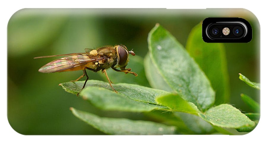 Hoverfly IPhone X Case featuring the photograph Hoverfly by Jouko Lehto