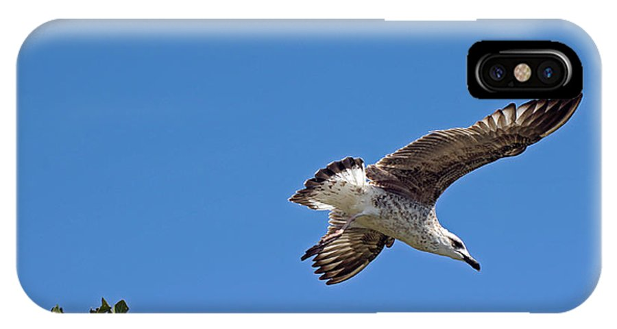 Gull IPhone X Case featuring the photograph Juvenile Herring Gull by Tony Murtagh