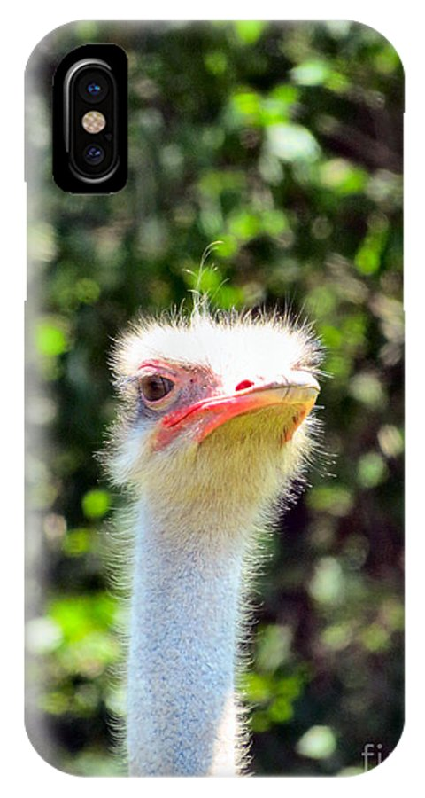 Ostrich IPhone X Case featuring the photograph Nosey by Art Dingo