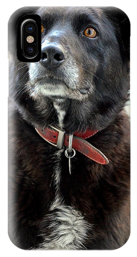 Dog IPhone X Case featuring the photograph Poppy by Martina Fagan
