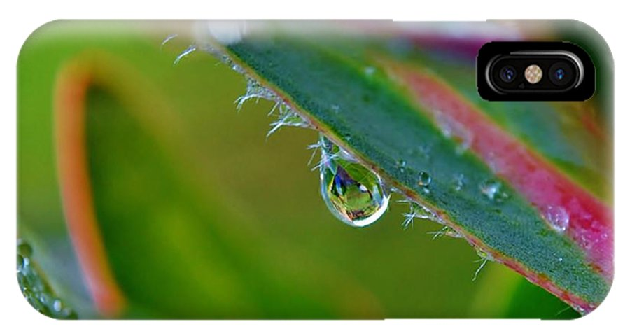 Macro; Image; Rain; Drop; Protea; Leaf; Droplets; Plant; Floral; Flower; Garden; Water; Wet; Reflection; Background; Green; Pink; Decorative; IPhone X Case featuring the photograph Rain Drop by Werner Lehmann