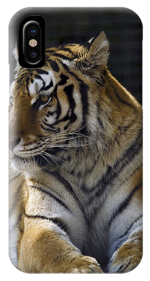 Siberian IPhone X / XS Case featuring the photograph Siberian Tiger by JT Lewis