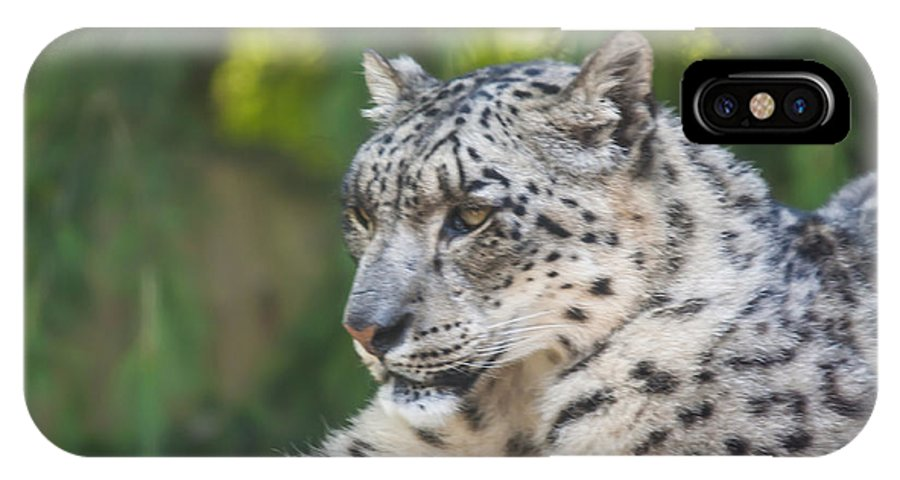 Dawn Oconnor Dawnoconnorphotos@gmail.com IPhone X Case featuring the photograph Snow Leopard by Dawn OConnor
