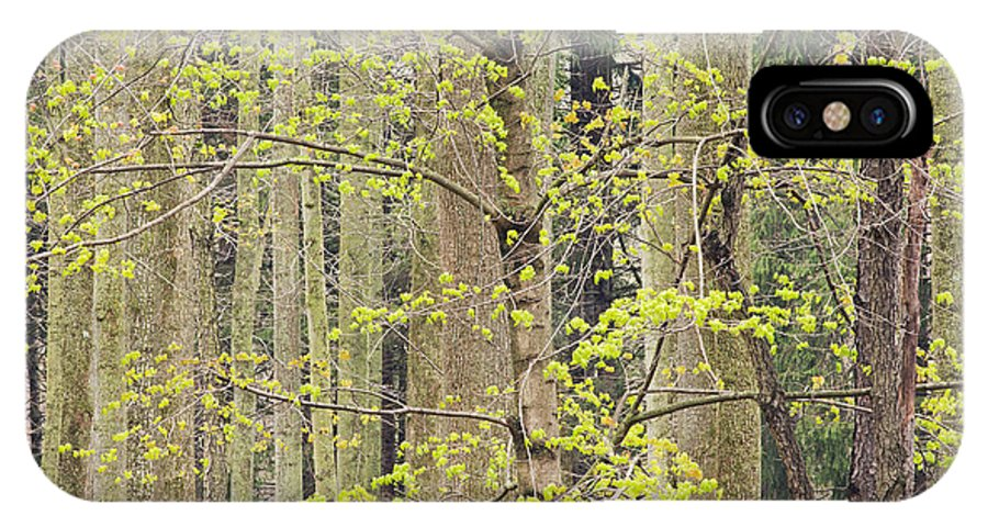 Spring IPhone X Case featuring the photograph Spring Forest by Dean Pennala