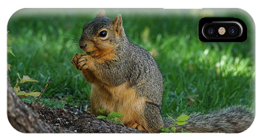 Squirrel IPhone X Case featuring the photograph Squirrel Eating by Lori Tordsen